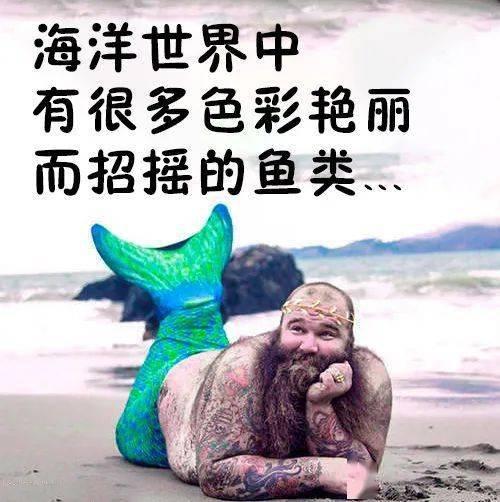 独角兽鱼:老公的大小很重要