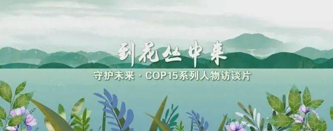 """【守护未来•COP15系列人物访谈】张石宝:20年初心不改 倾力保护""""植物界的大熊猫"""""""