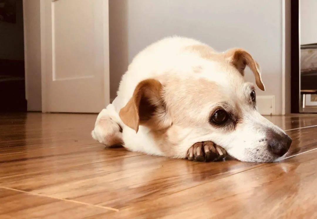 """狗子去世后,5个月后的暴雨天,主人又在街上遇见了""""它"""""""