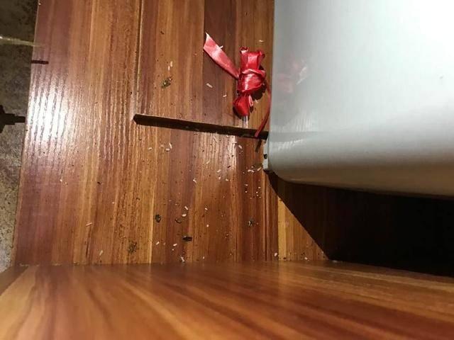 灭蟑螂最有效的方法(民间土法灭蟑螂)