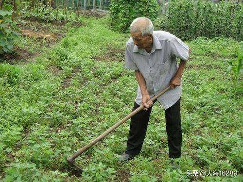如果农民有可观的退休金了,种地农民会不会多起来?