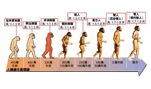 从生物进化角度讲,女性择偶有哪些偏好呢?