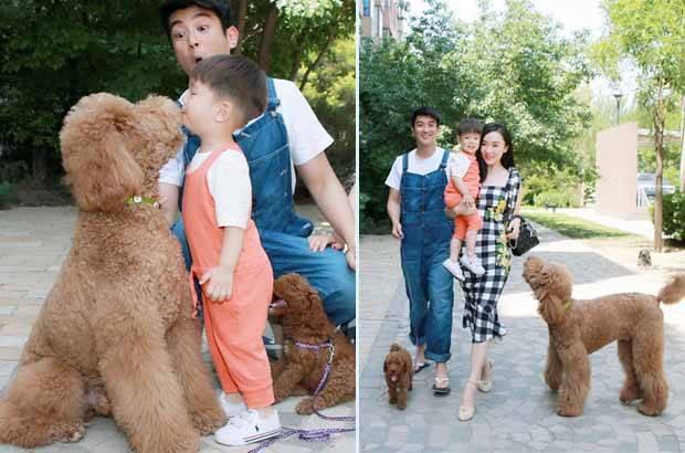 巨型泰迪犬多少钱一只(巨型泰迪犬为什么这么贵)插图(5)