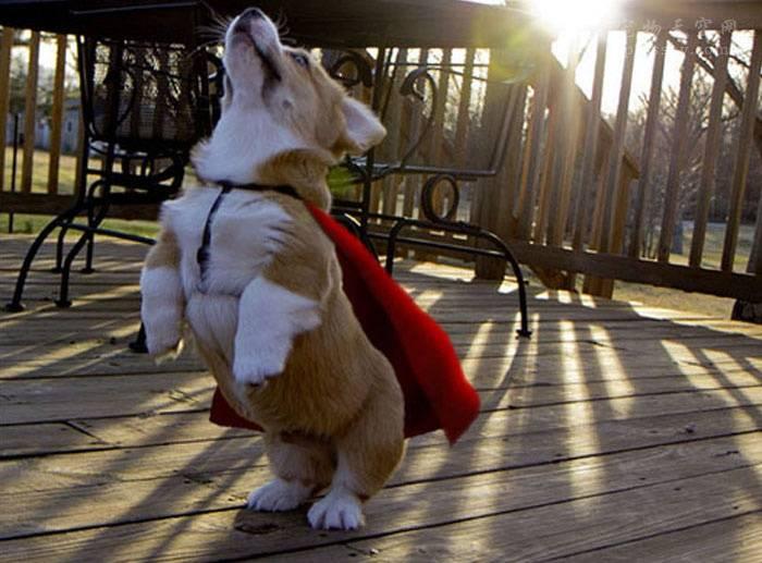 养多少狗一年赚二十万(养狗需要哪些花费呢)插图(1)