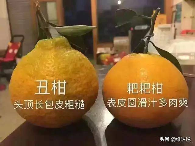 丑橘的功效与作用禁忌(丑橘好吃吗)插图(8)