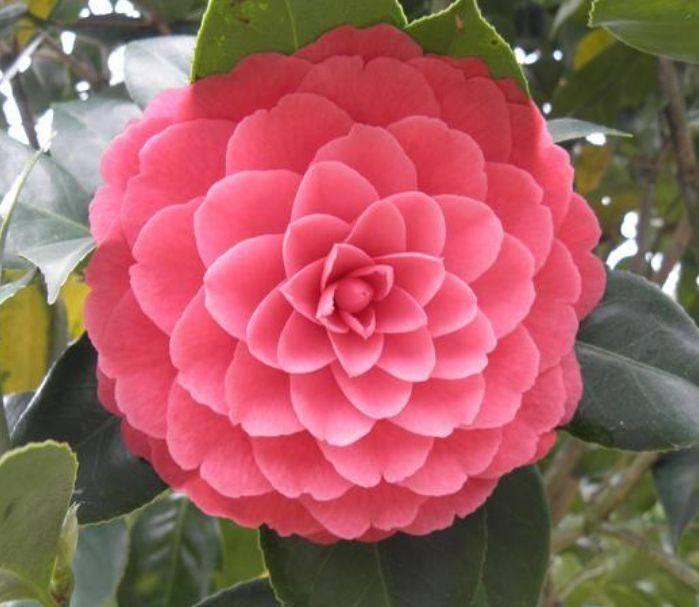 """家有院子,一定要养""""4种花"""",开花大又香,开出一片花海"""