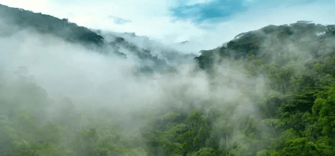 【干货分享】2020年古六大茶山之易武茶之古曼撒,千山万水只等你!