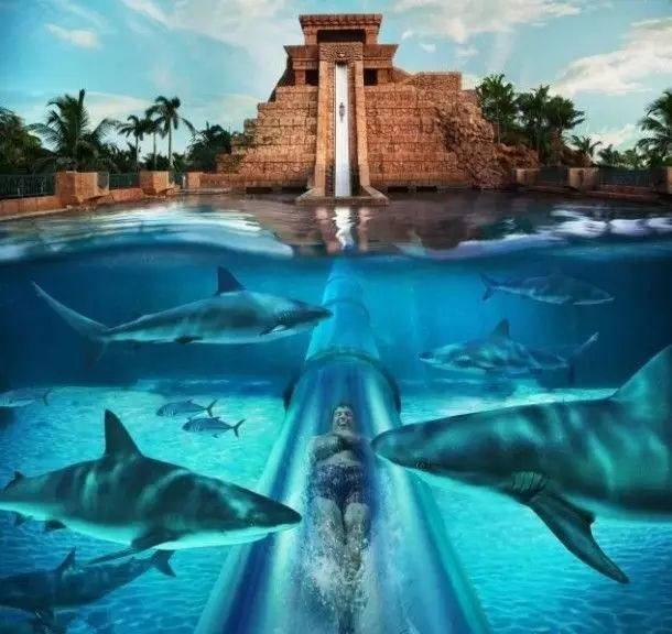 全球最刺激的滑梯,2秒从30米高空冲入鲨鱼池,游客鲨鱼口逃生