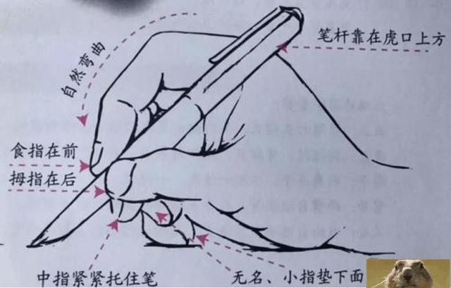 左撇子天生更聪明?关于左利手的三个真相,多数爸妈都理解错了  第11张