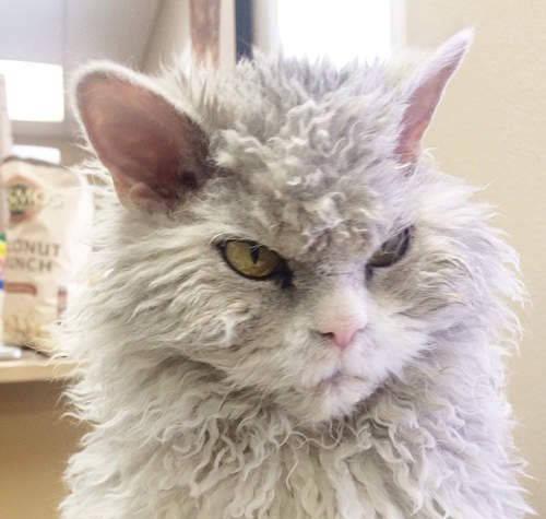原来铲官忘了给猫带猫粮,猫得知后露出了这个表情。网友笑喷:你有麻烦了!