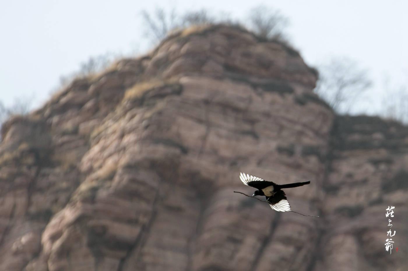 原创             正月里来春来早 甘陶河上苍鹭飞