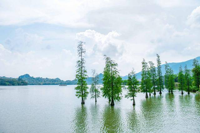 """原创             广东有个神奇的湿地公园,能看到""""卧佛含丹""""的壮观景象,想看吗"""