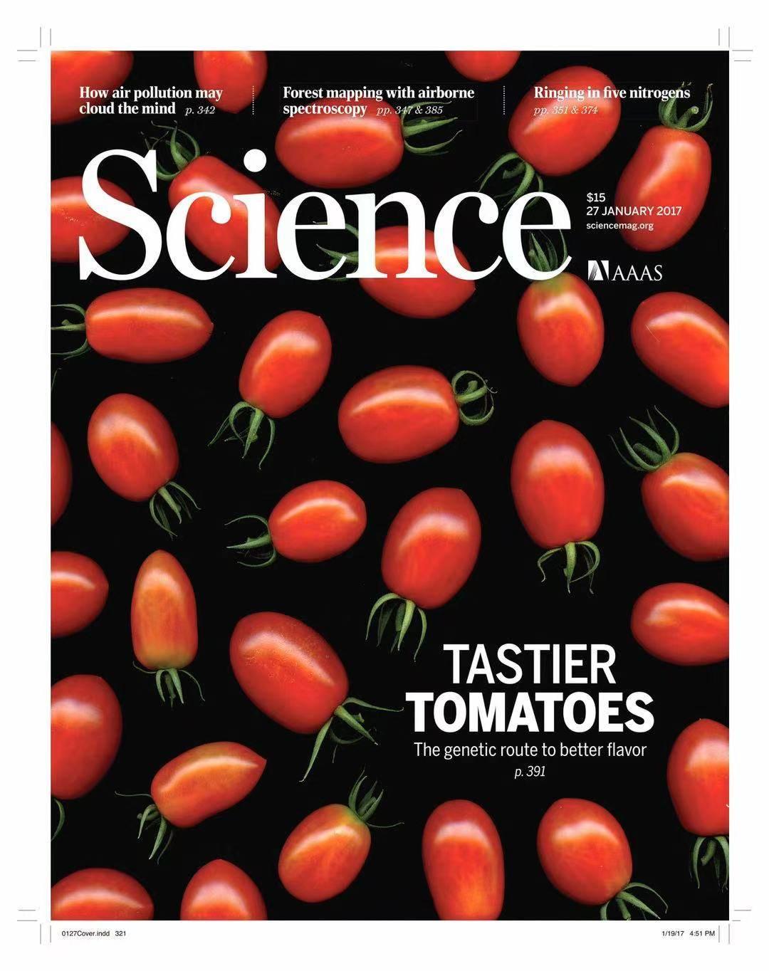 """""""深爱""""系列美味番茄首次新品发布,前沿科技服务于消费者味蕾"""