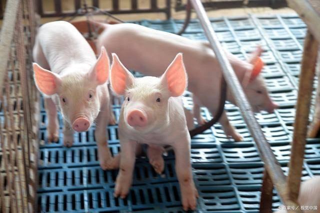 生肖猪最旺财的属相,财神下凡,一改去年的霉运 接住了就翻身