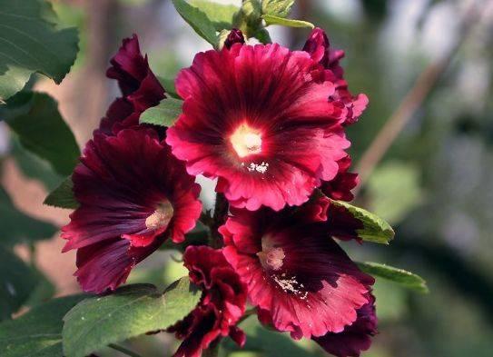 适合阳台养护的花卉,新手也能养爆盆,花色艳丽,花开枝繁叶茂