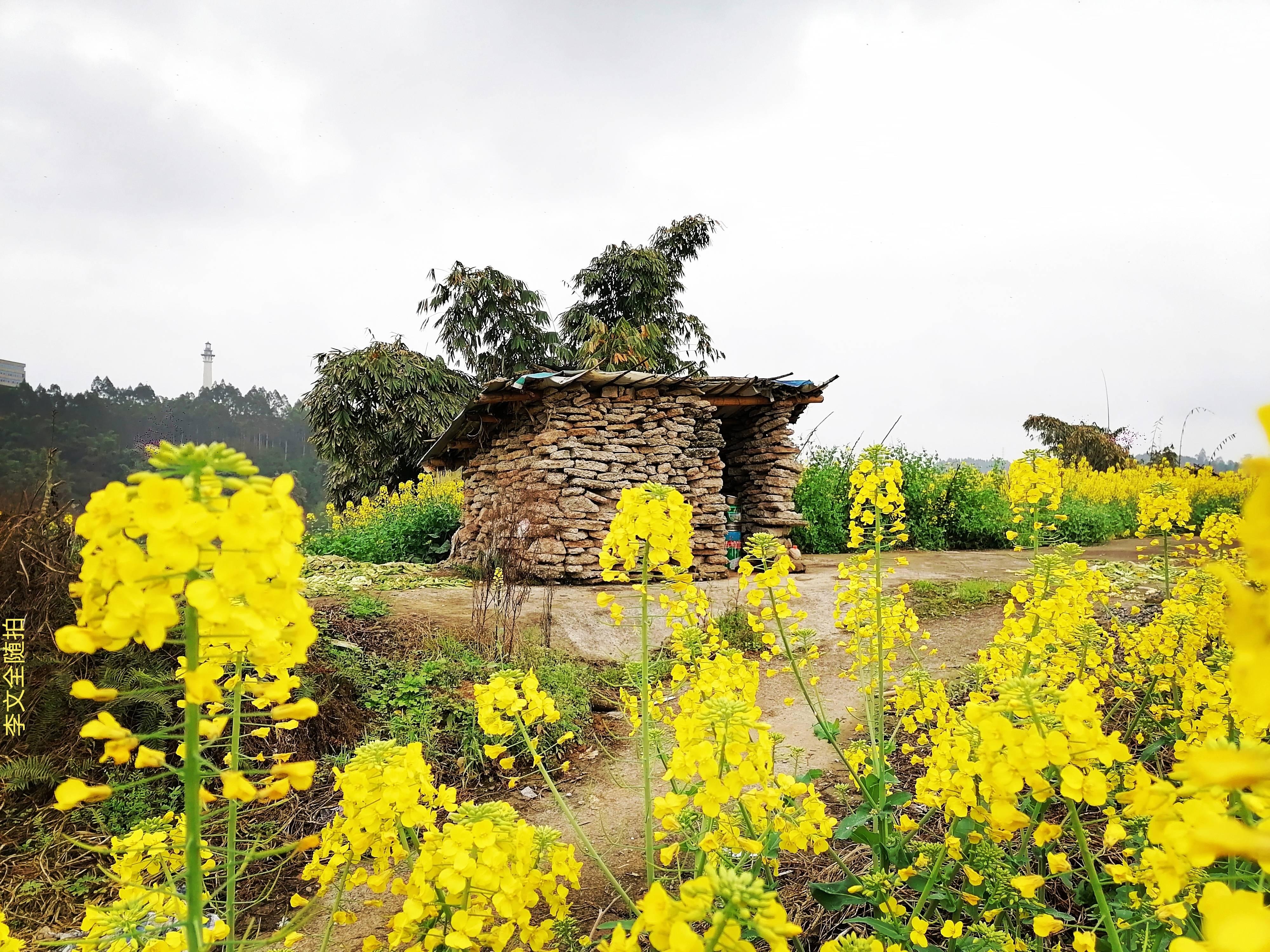 李文全随拍:小屋一间花朵满园,这应该是怀乡人的情愫别墅吧