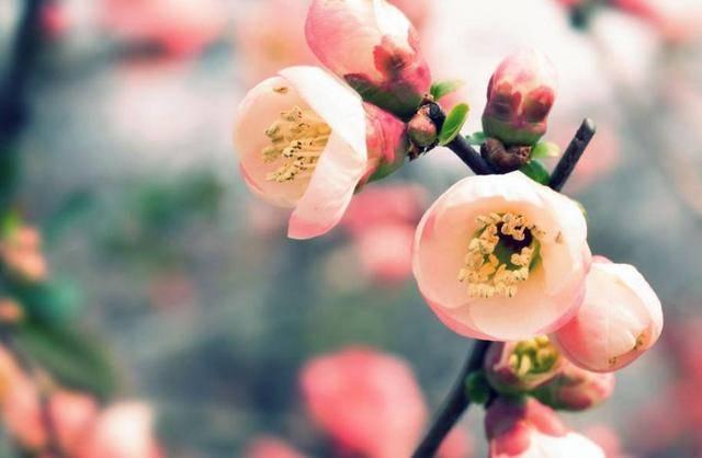 熬过大难3月5日开始,狗·马·龙喜迎好运,桃花旺,横财发,幸福悄悄来袭!