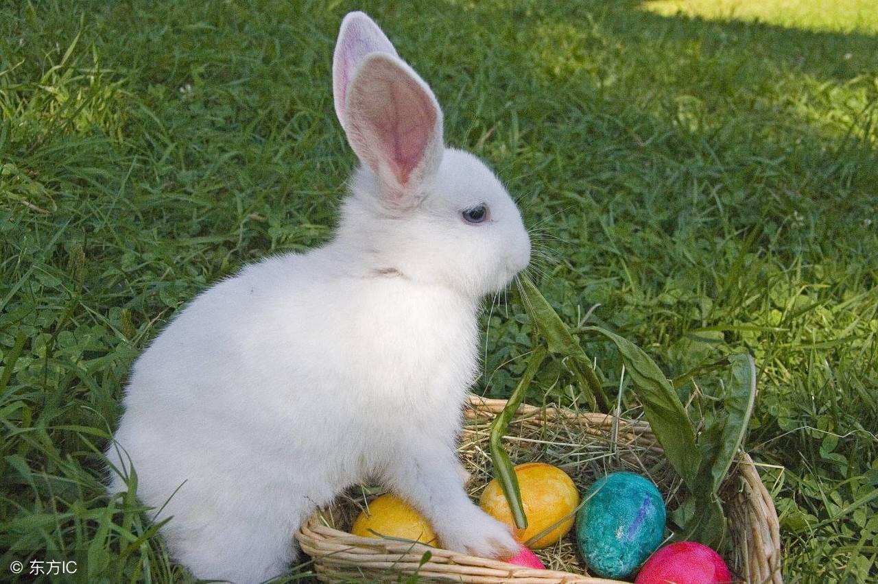 男朋友喜欢吃我的兔子 夜晚怎么给老公新鲜感