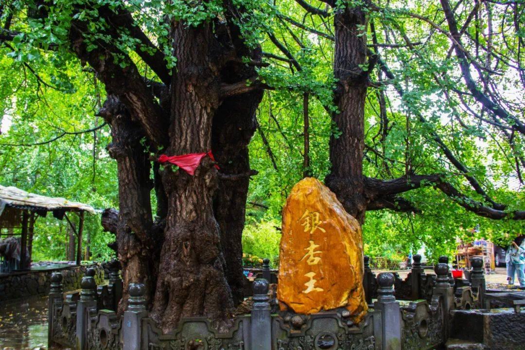 """云南腾冲银杏村,传承千年,横跨四季的""""农耕文化"""",有何特别?"""