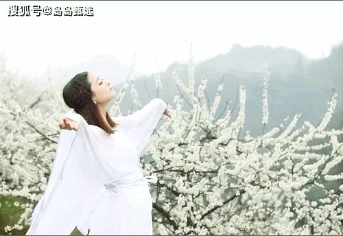 2021莱阳第三十届浪漫梨花节4月10日盛大开幕