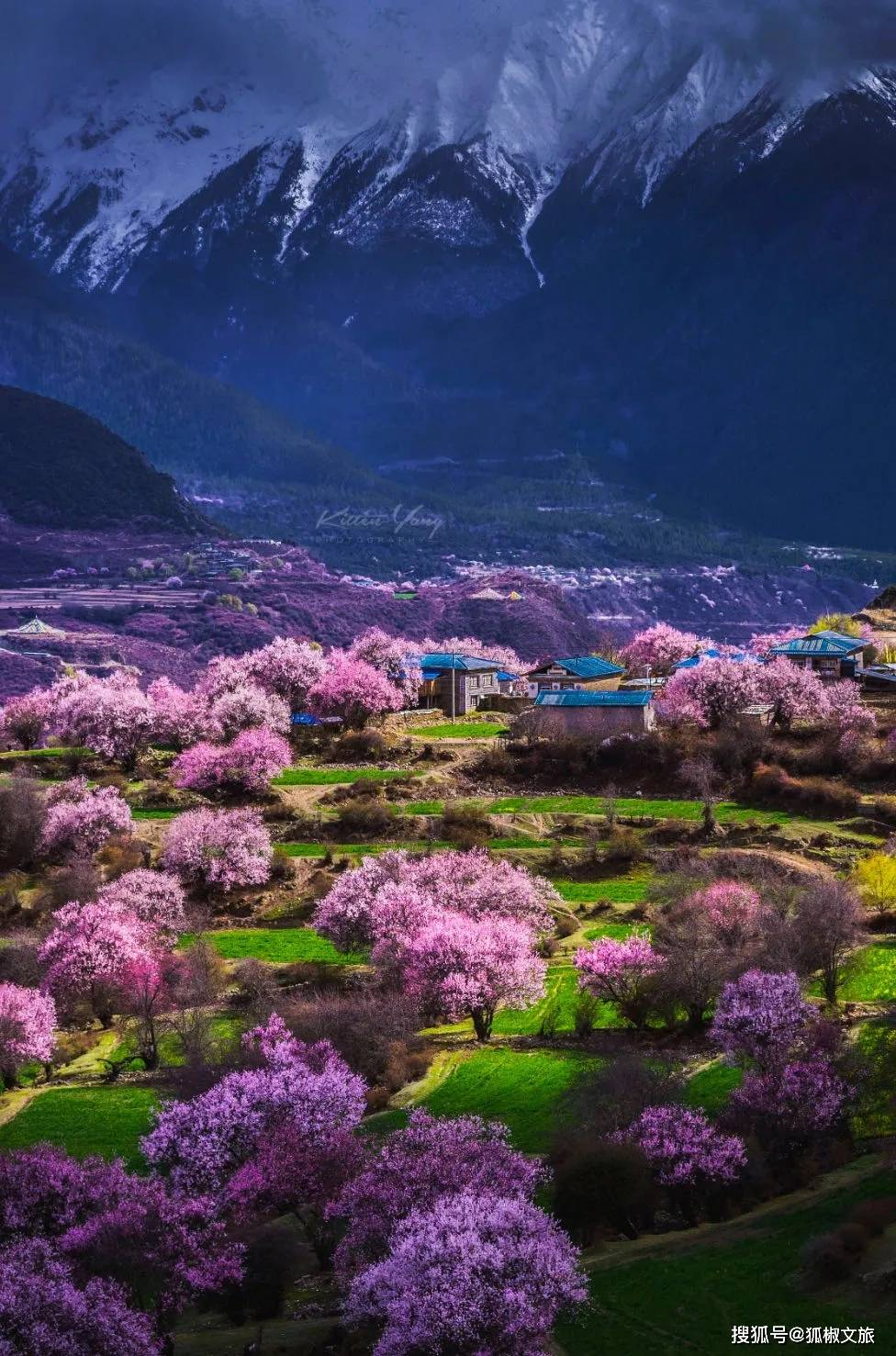 中国最旺的桃花,竟然在西藏