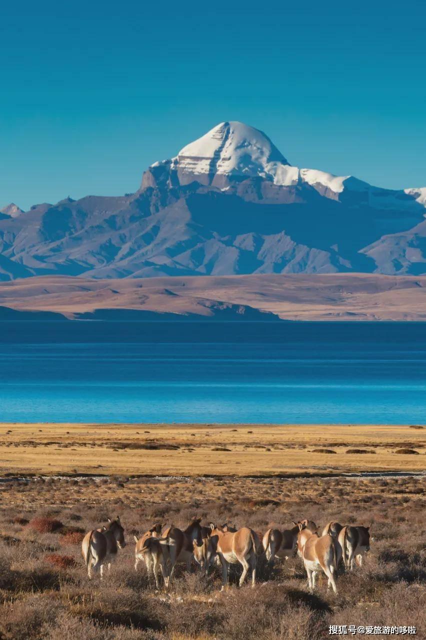 忽然,想去西藏了...