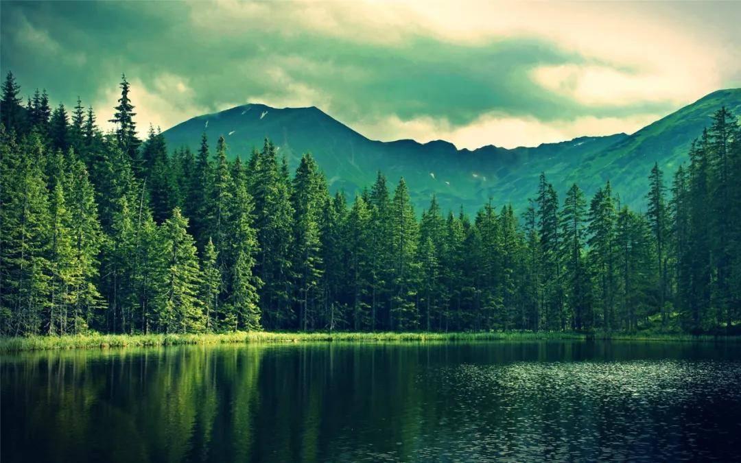 陈根:回归大自然,是天然的抗抑郁良药