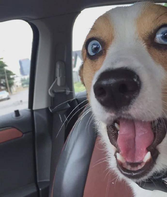 小狗勾因一双迷人眼睛火爆全网,网友:迪士尼在逃公主!