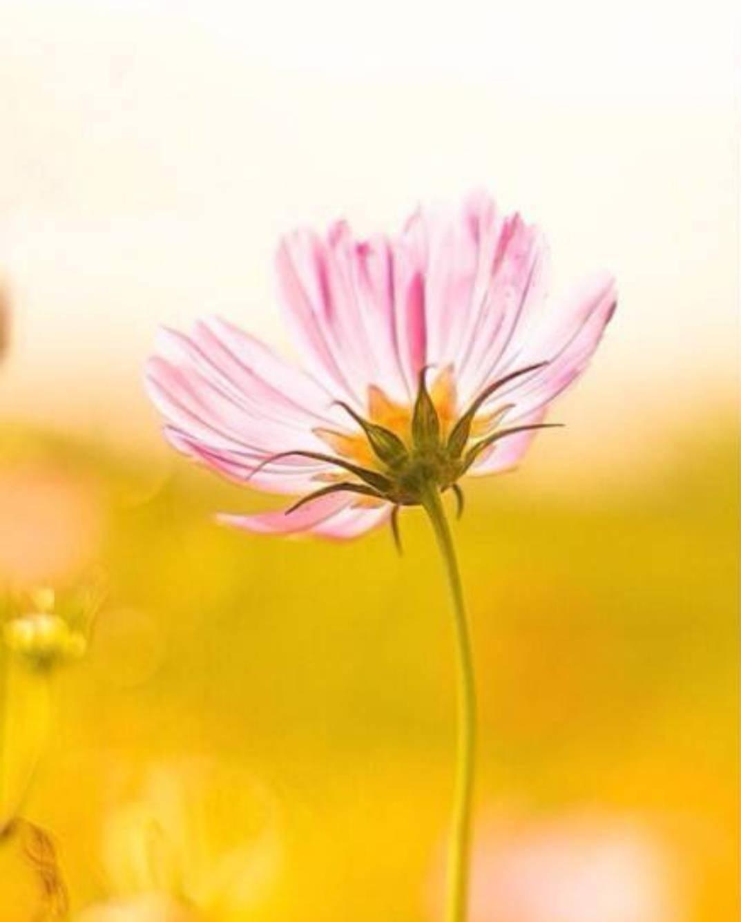 梦见一朵花,正在向上长着? 梦见家里鲜花正在开放