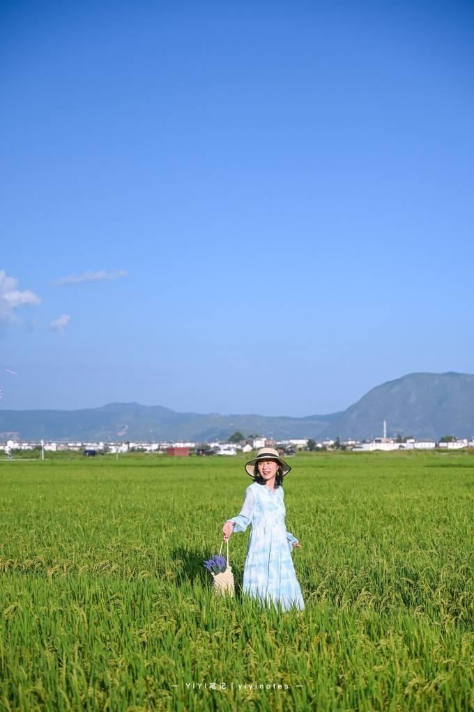 大理超治愈的稻田,仿佛走入宫崎骏的世界,感受田园生活
