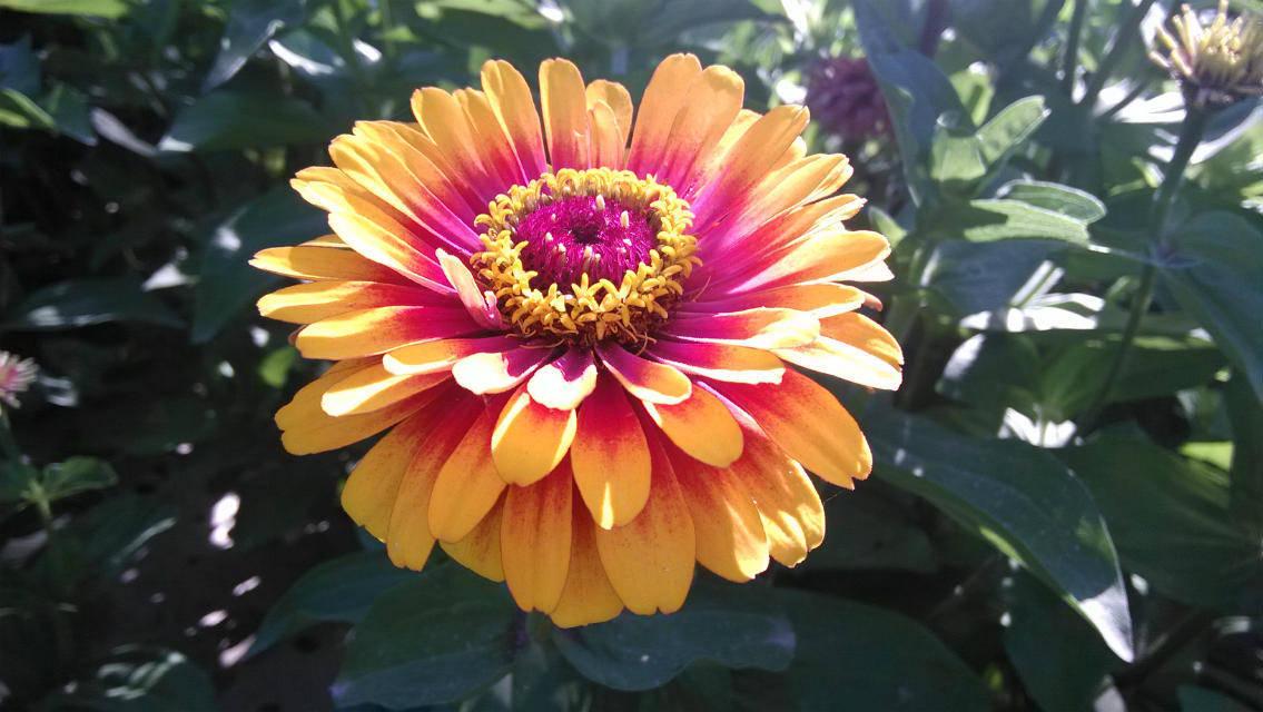 心理测试:4朵预言花,你最喜欢哪朵?测你的孩子有多大的福气?