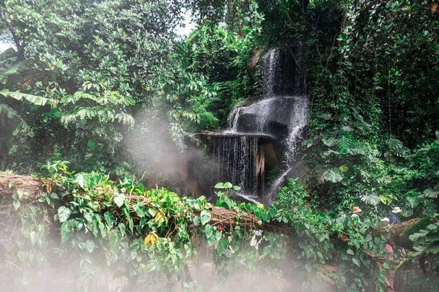 游厦门植物园,赏植物界奇观,超适合夏季去避暑打卡拍照!