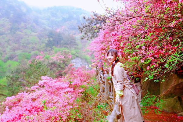 原创             杜鹃花开满云雾山,雨中漫步别有一番风味。