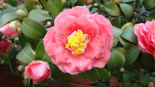 下周起桃花围绕,收获真爱,和另一半过上甜蜜生活的三个星座  第1张