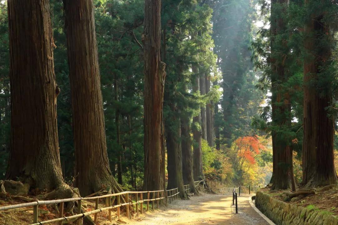 清酒、魔法、温泉、松尾芭蕉……为什么这辈子我们必须去一次日本东北