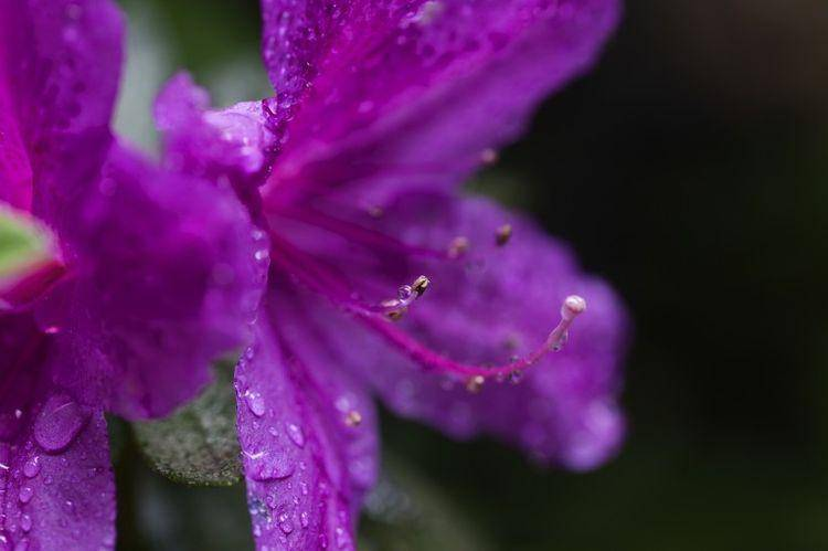 6月初,桃花开姻缘旺,喜鹊欢叫,甜蜜恋爱,幸福一生的四大生肖  第1张