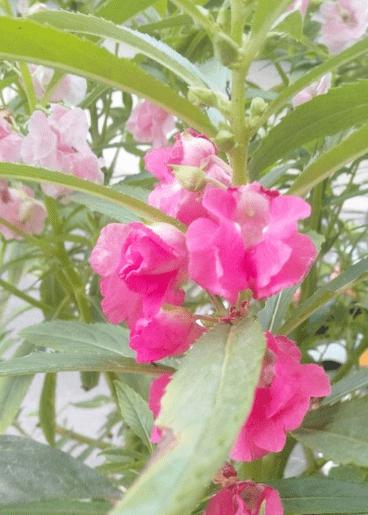 未来一周,喜鹊报喜,4属相桃花如虹,贵人多多,生活更精彩