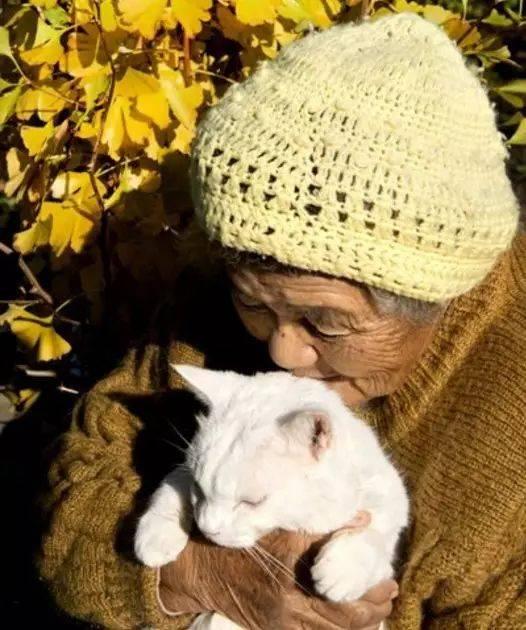 日本老奶奶收养了一只耳聋小猫,这是我听过对离别最温暖的解读