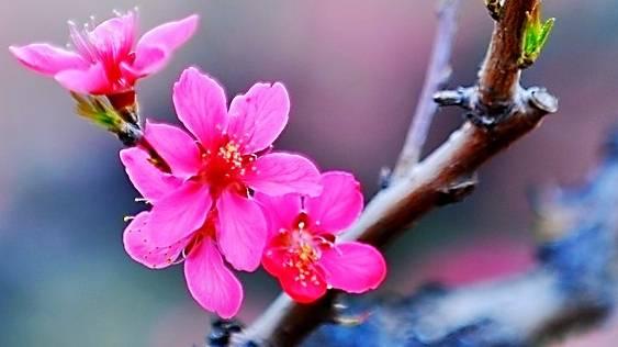 5月中下旬後,氣運如虹,福星高照,桃花運滿滿的生肖,網友:竟然沒有馬肖