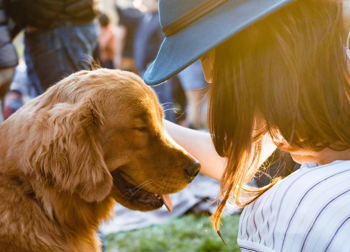 狗狗绝育最佳时间 狗狗绝育手术最佳时期