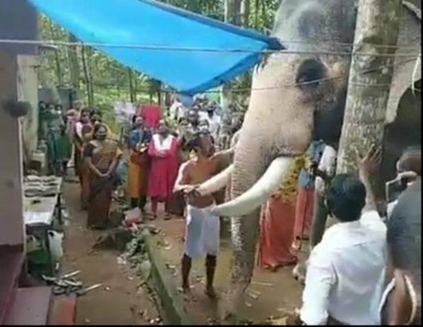 伤心欲绝的大象步行15英里,参加人类朋友的葬礼,场面让人落泪