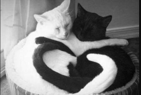 这碗猫粮下肚你可能消化不动?世界上最美的爱心就是你们!