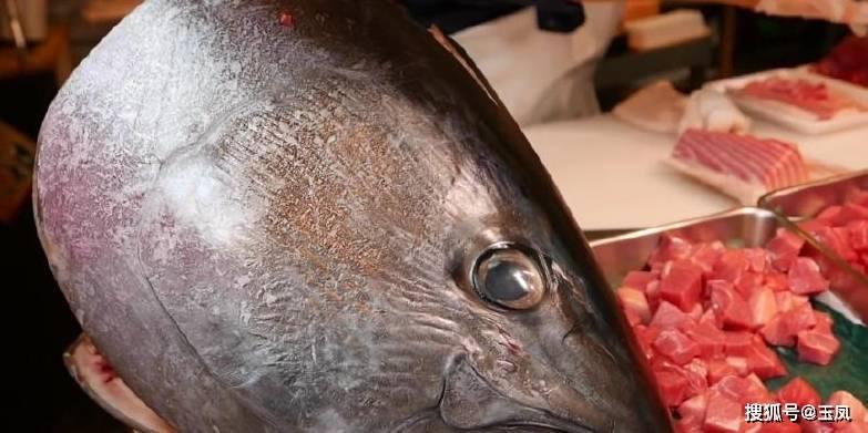去日本出差買回一條金槍魚,切開一摸不愧為頂級海鮮,比豆腐還嫩