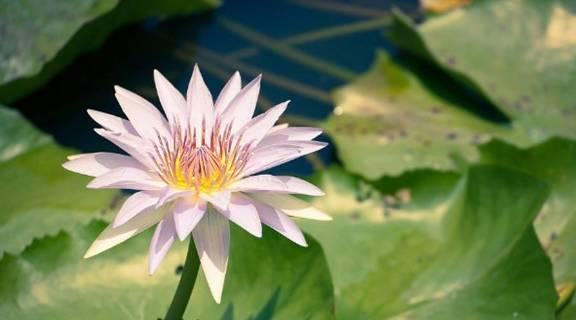 8月迎喜報,3生肖桃花朵朵,生意火火,兩件喜事一起來!