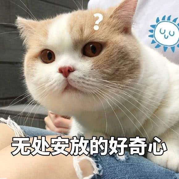 快乐就完事!看网元圣唐如何打造大众喜爱的IP