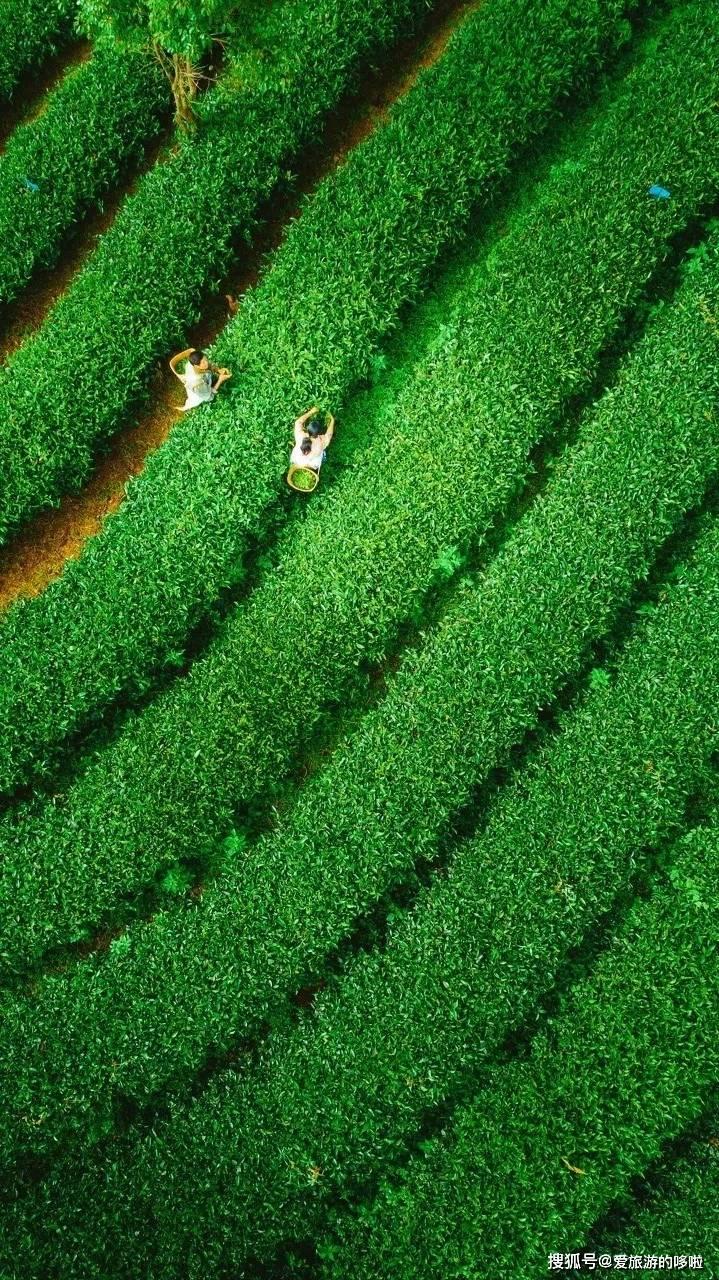 《云南虫谷》破2.9亿!揭开云南最后的秘境,美食吃一周都不够