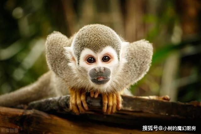 亚马孙雨林到底有多恐怖,被称为人类禁区,却依然有原始人存在