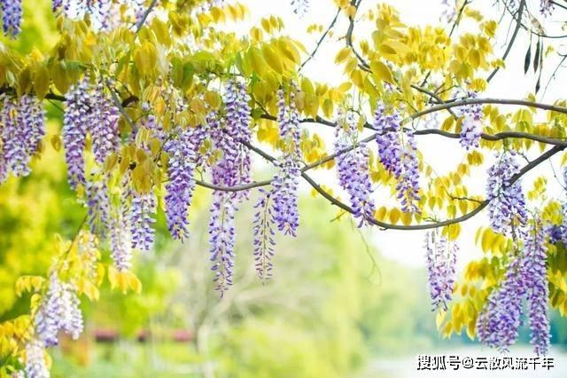 花儿落,柳絮飞!8首送春诗词,告别最美春天