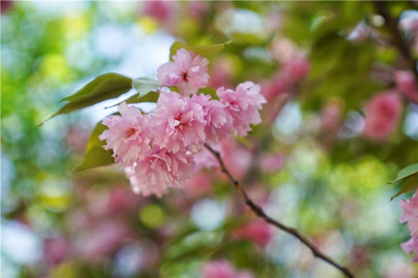 安徽宿州有个江南园林,环境清幽不收门票,一年四季都有好风景