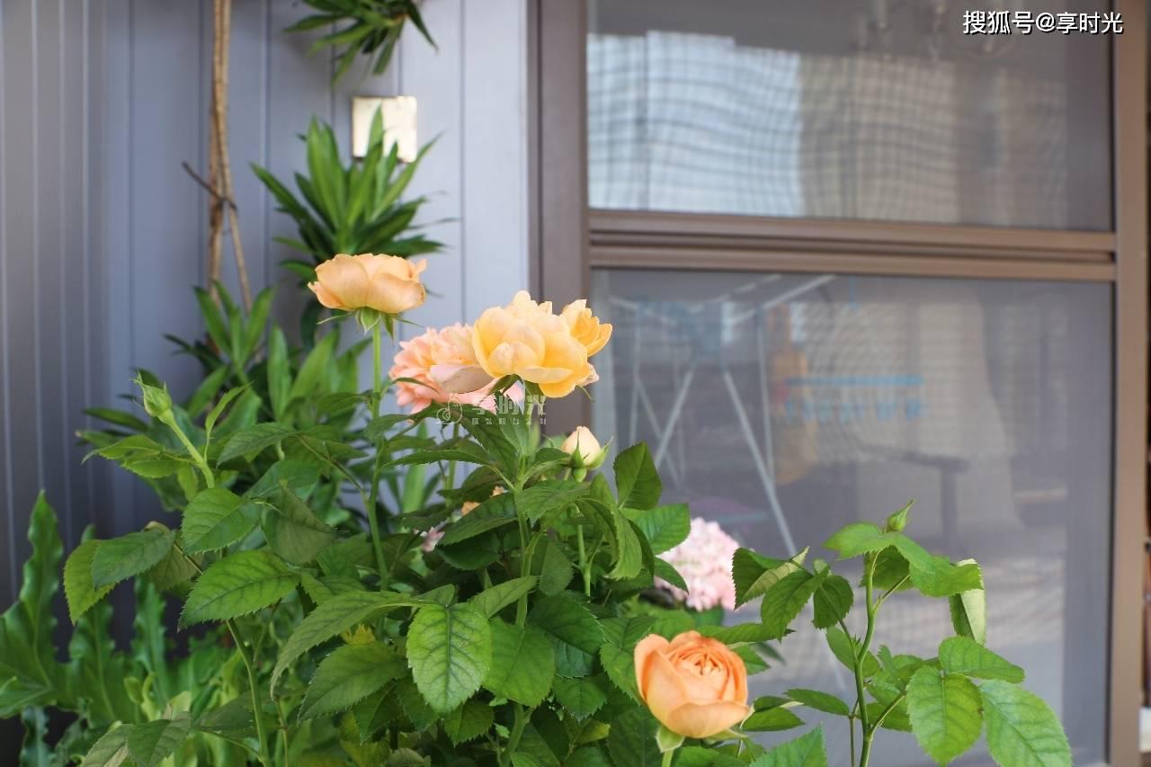 木阳台●享时光|灰色调的整装阳台,可以如此优雅,气质满满